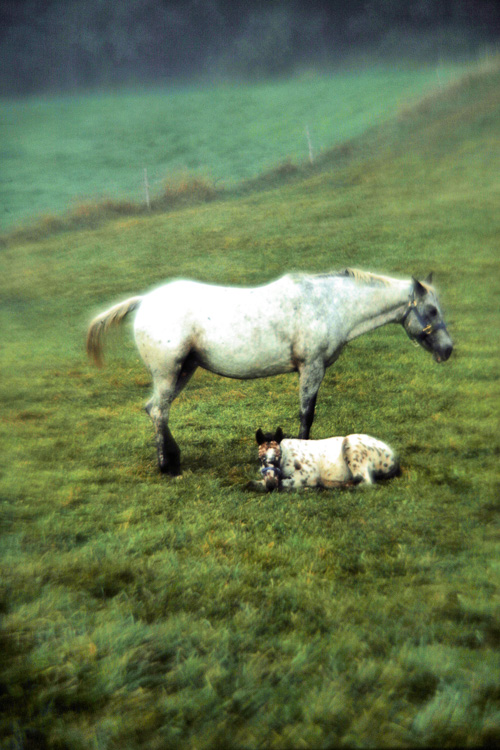 Horse-with-Colt.jpg