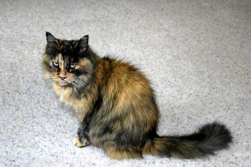 Pussy-Cat.jpg