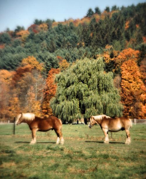 Two-Horses.jpg