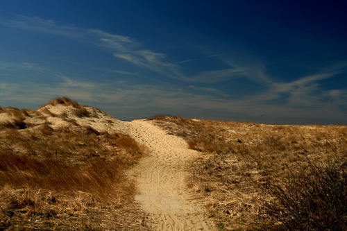 Beach-Path.jpg
