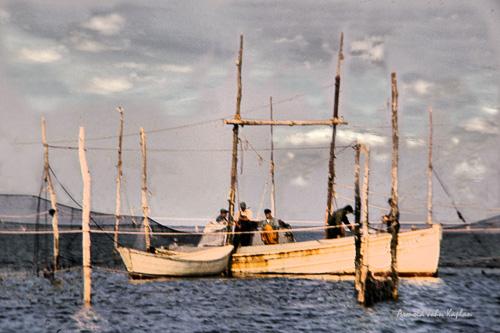 Fish-Weir.jpg