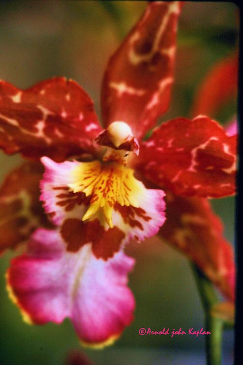 Orchid--2.jpg
