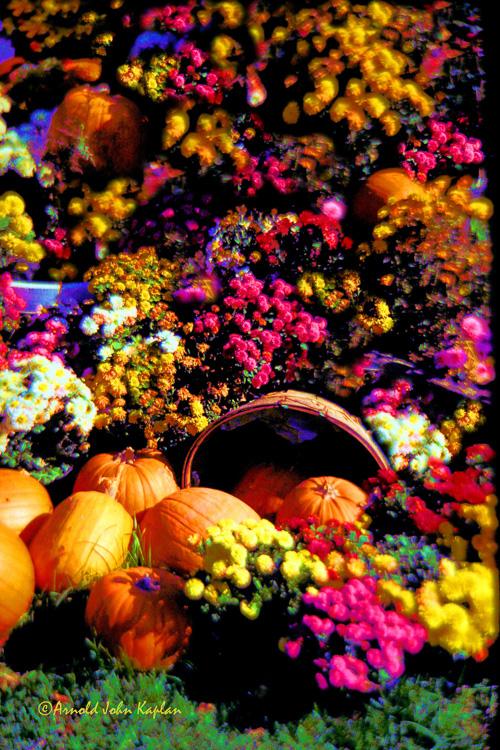 Pumpkins-and-Flowers.jpg