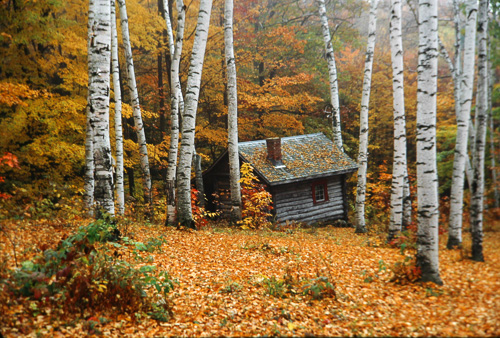 Cabin-In-Birches.jpg