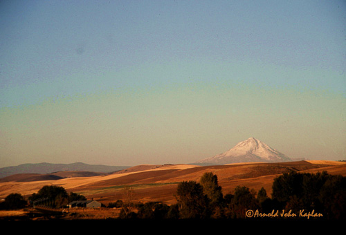 Mt-Hood-And-Wheat-Fields--3.jpg