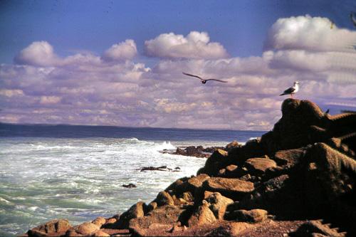 Calif-Coastline.jpg